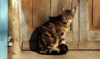 πρώιμη διάγνωση νεφρικής ανεπάρκειας στη γάτα