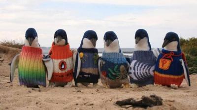 πουλόβερ για πιγκουίνους 300